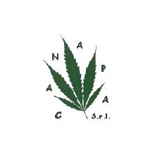 Caa-Canapa